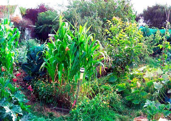 Peut on manger de la viande dieu sur terredieu sur terre for Rendement permaculture